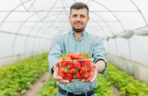 Rolnik trzymający truskawki wopakowaniu